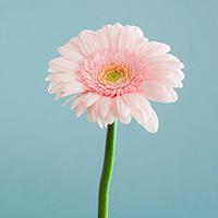Consegna fiori a domicilio in Regno Unito online