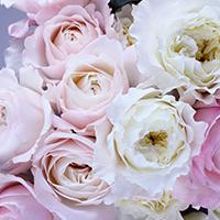 Consegna a domicilio di fiori e piante in Repubblica Domenicana online