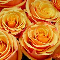 Consegna fiori a domicilio in Tunisia online