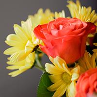 Consegna fiori e piante in Colombia online