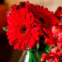 Consegna fiori e piante in Croazia online