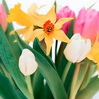 Consegna a domicilio fiori e piante in Emirati Arabi online