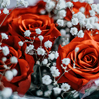 Consegna fiori a domicilio in Norvegia online
