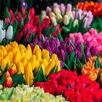 Consegna a domicilio fiori in Olanda online